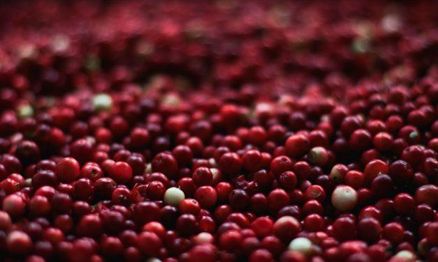 Problemi con le vie urinarie? Prova il mirtillo rosso comunemente denominato cranberry