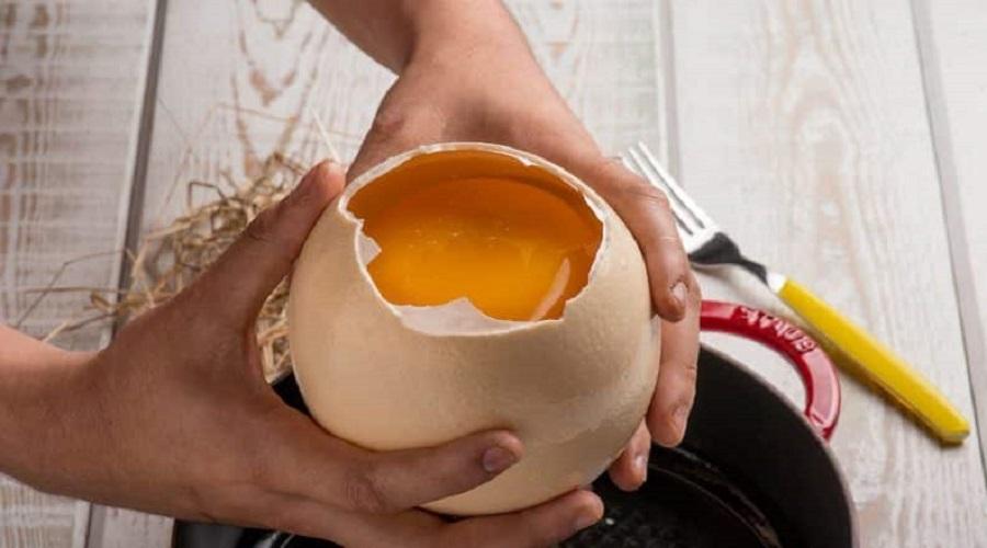 Ricette gustose con le uova di struzzo